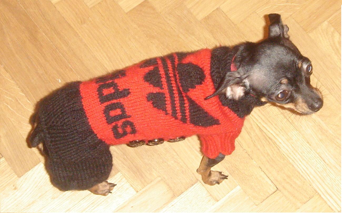 Одежда для собак вязаный